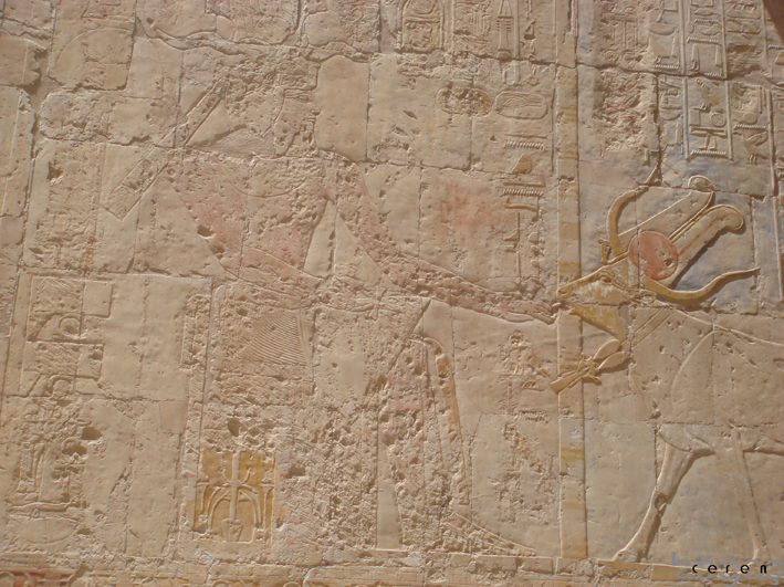 The picture on the left: The records say that Hatshepsut had taken a strong ...